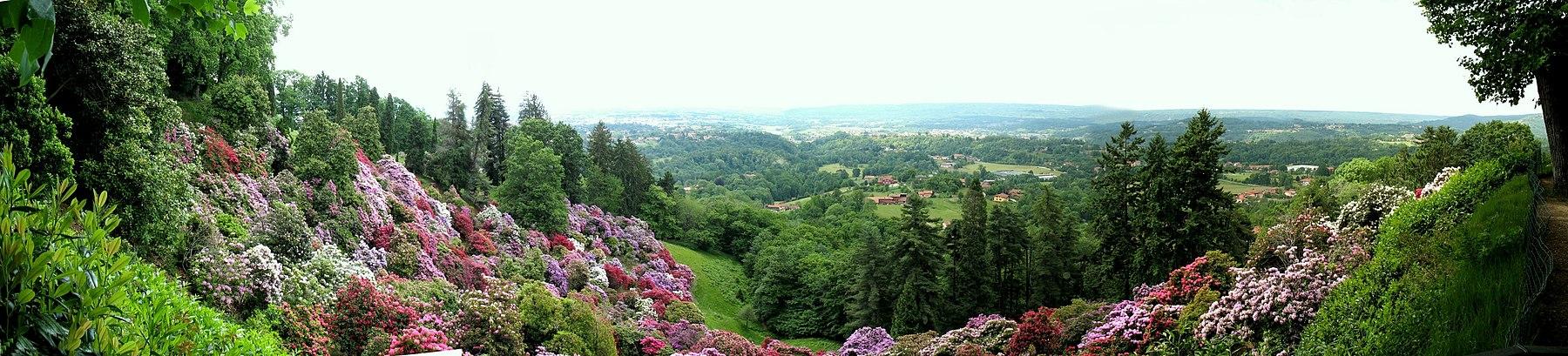 цветущие азалии в Италии