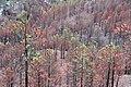 Burnt Forest 2 (2278903947).jpg