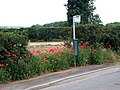 Bus Stop with Flora - geograph.org.uk - 188331.jpg