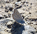 Butterfly, 02.jpg