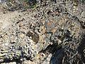 Bygdoy oslo IMG 2905 cambrosiluran geology.JPG