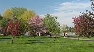 Dominion Arboretum - Arboretum's pathway along crabapple trees collection