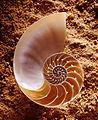 CSIRO ScienceImage 2933 Nautilus shell.jpg