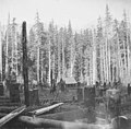 Cabin in a clearing, showing mountain range in distance, Snoqualmie Pass, October 15, 1896 (WAITE 119).jpeg
