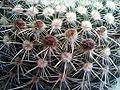 CactusBrownSpots.jpg