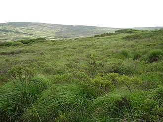 Caher Mountain - Very rough hillside and bog running up to the summit of Caher Mountain