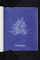 Calithamnion roseum (NYPL b11861683-419656).tiff