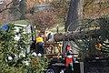 Capitol Christmas Tree 2013 Arrives (11051879233).jpg