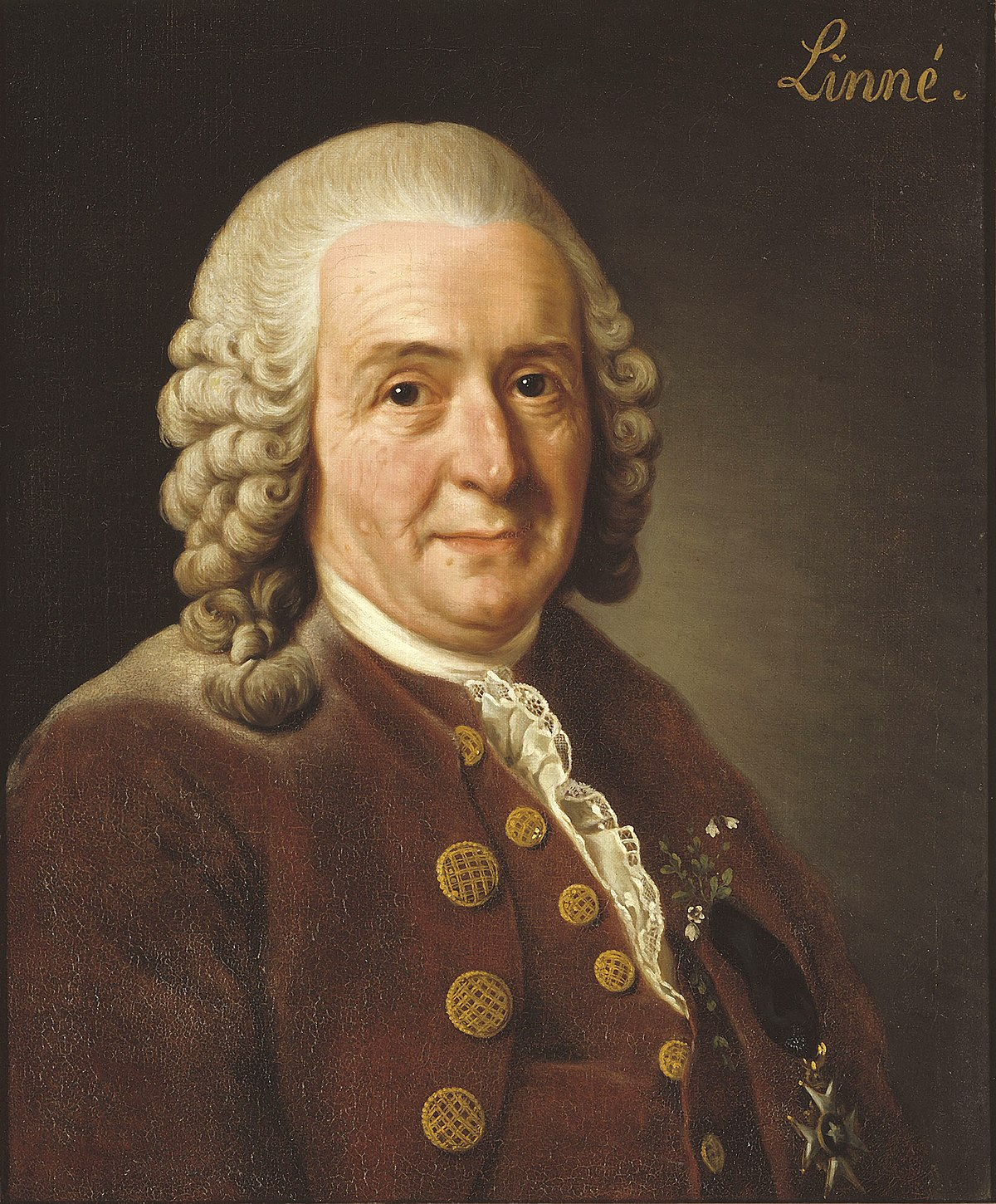 "Portrait of Linnaeus on a brown background with the word ""Linne"" in the top right corner"