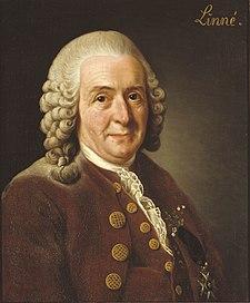 Carl von Linné, malet af Alexander Roslin, 1775. I dag ejet og udstillet af Det Kongelige Svenske Videnskabsakademi.