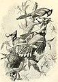 Cassell's natural history (1854) (14563719010).jpg