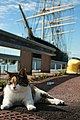 Cat in front of Pommern Ship - panoramio.jpg