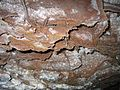 Cave Boxwork-Wind Cave-2.jpg
