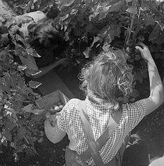Cecil Beaton Photographs- Women's Horticultural College, Waterperry House, Oxfordshire, 1943 DB254.jpg