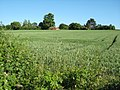 Cereal field, Bredicot - geograph.org.uk - 857756.jpg