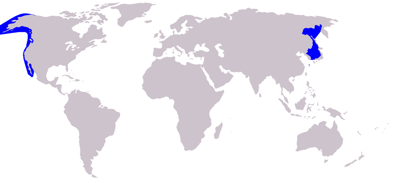 1280px-Cetacea_range_map_Gray_Whale.png