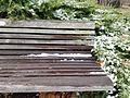 Chadwick Arboretum (31820724363).jpg