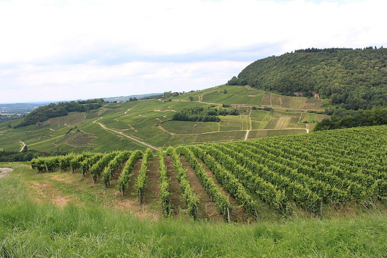 Chateau-Chalon - Vignobles.JPG