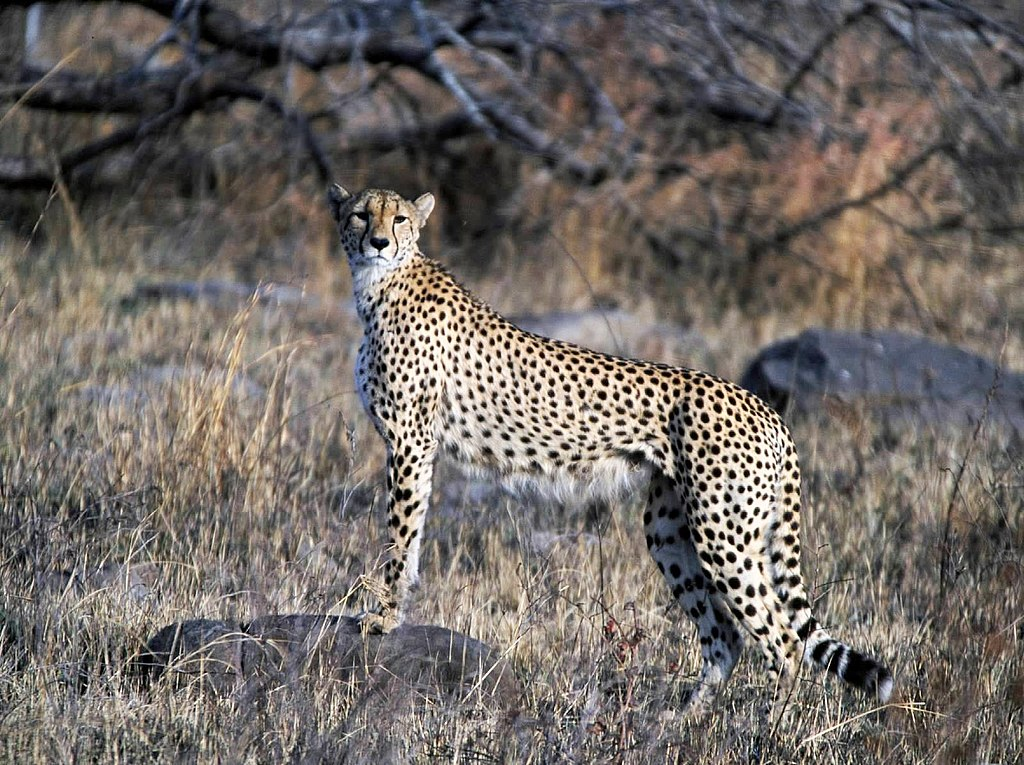 Cheetah Is The New Black Home