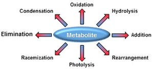 Metabolite damage - Examples of spontaneous chemical reactions a metabolite can undergo in vivo.