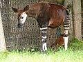 Chester Zoo (14731948681).jpg