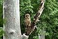 Chinnar Wildlife Sanctuary IMG 9072 (32).JPG