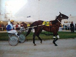 Chokin New Zealand Standardbred racehorse