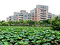 Chung-Jen Junior College of Nursing, Health Science and Management, Dalin Campus, lotus pond (Taiwan).jpg