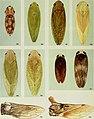 Cicadelles des arbres ornementaux et fruitiers du Canada (1985) (20422921728).jpg