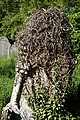 City of London Cemetery overgrown gravestone ivy 3 lighter.jpg