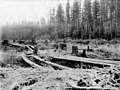 Cleared land with logs layed across trenches, probably Washington, between 1900 and 1915 (INDOCC 1772).jpg