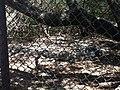 Cocodrilos Estero Boca Negra.jpeg