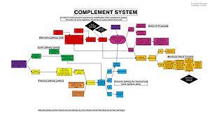 C5-convertase - Complement system