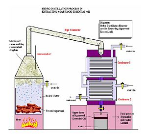 Herbal distillate - Hydro-Distillation Process in Extracting Of Agarwood Essential Oil.