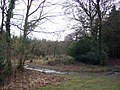 Coopers Wood, New Forest. - geograph.org.uk - 661915.jpg
