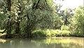 Copaci la marginea Lacului Beleu.jpg