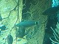 Coral World Underwater Observatory 33.jpg