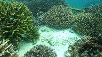 File:Corals in Myanmar.webm