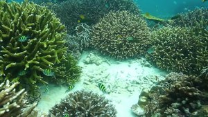 File:Corals in Myanmar.webm