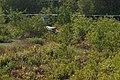 Coringa reserve forest park mangrove forest 13.jpg
