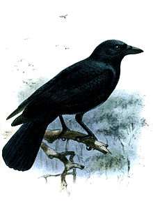Painting of a large, black bird perched on a branch