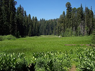 """Franklin (tree) - Crescent Meadow in Giant Forest, called by John Muir the """"Gem of the Sierras"""""""