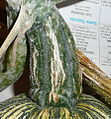 "Cucurbita argyrosperma ""calabaza rayada o cordobesa"" (Florensa) fruto F05 20160325 cosechado pedúnculo.JPG"