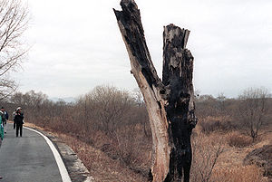 Korean axe murder incident - Remains of the tree that was the object of the 1976 axe murder incident, taken in 1984. Deliberately left standing after 'Operation Paul Bunyan,' the stump was replaced by a monument in 1987.