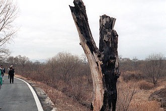 Korean axe murder incident - Remains of the tree that was the object of the 1976 axe murder incident, taken in 1984. Deliberately left standing after Operation Paul Bunyan, the stump was replaced by a monument in 1987.