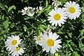 Daisy 2020-06-11 016.jpg