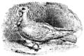 Darwin Domestic 122.png