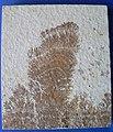 Dendrite, not a fossil.jpg