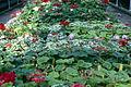Dicksons Florist greenhouse beds 016.jpg