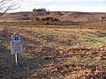 Digden Bottom, Ibsley Common, New Forest - geograph.org.uk - 312982.jpg